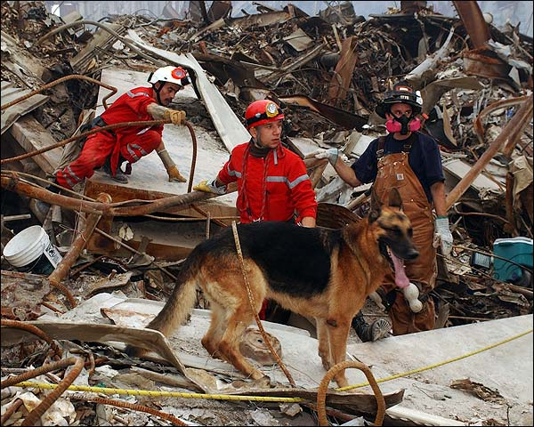 French Urban Search and Rescue 9/11 Photo Print for Sale