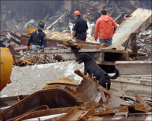 Rescue Dog and Search Crew 9/11 Photo Print for Sale
