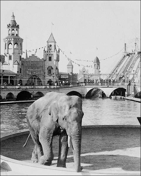 Luna Park Coney Island Elephant NYC 1904 Photo Print for Sale