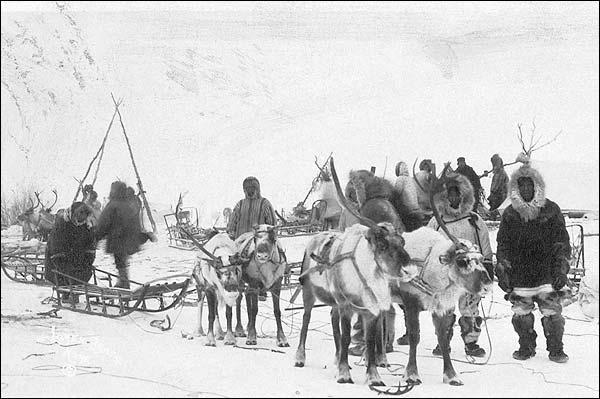 Reindeer Sledding Team 1922 Alaska Photo Print for Sale