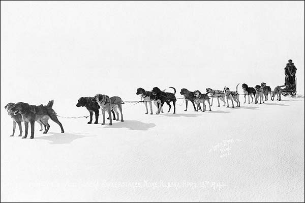 Dogsled Race Team Alaska Sweepstakes 1914 Photo Print for Sale
