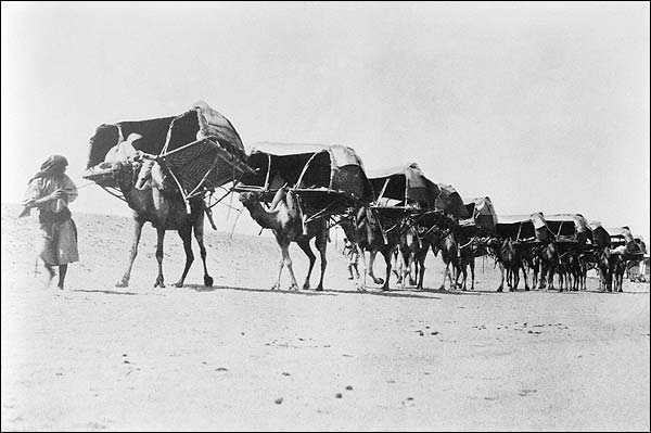 Camel Caravan of Pilgrims To Mecca 1910 Photo Print for Sale