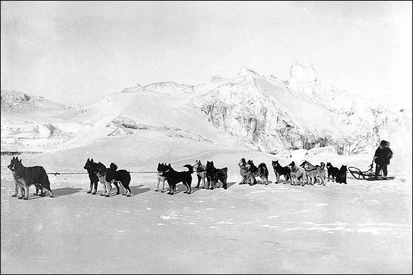 All Alaska Dog Sled Sweepstakes 1910 Photo Print for Sale