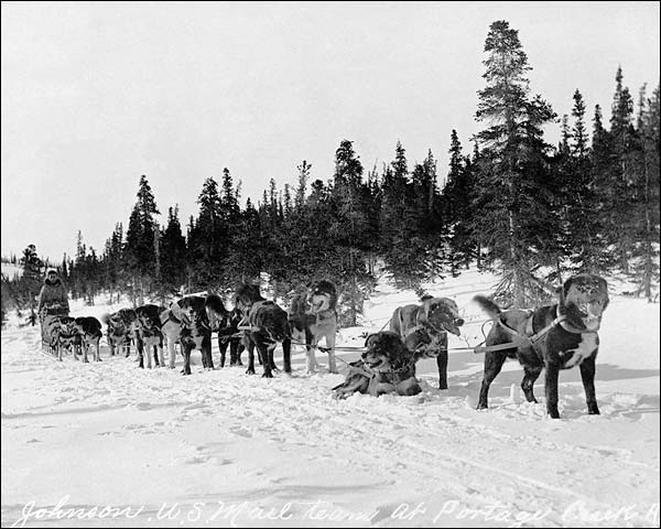 Erick Johnson & U.S. Mail Dog Sled Team Photo Print for Sale