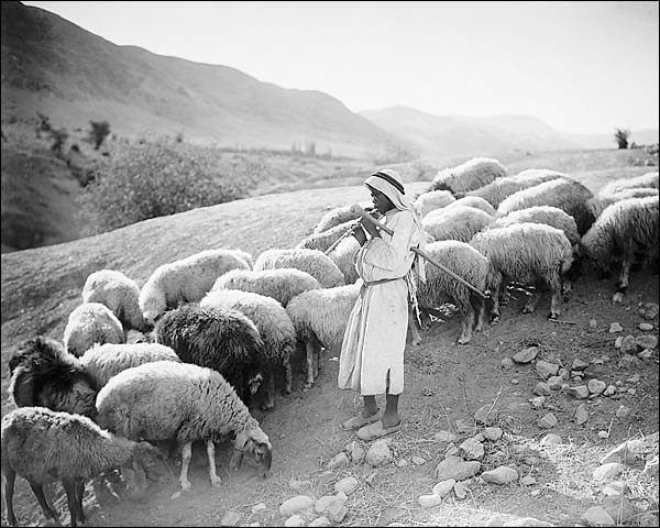Shepherd Boy & Sheep Jordan River 1920s Photo Print for Sale
