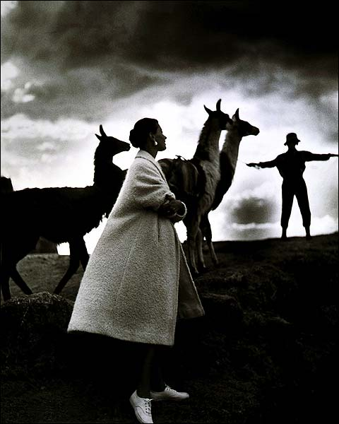 Fashion Model & llamas Peru Toni Frissell Photo Print for Sale