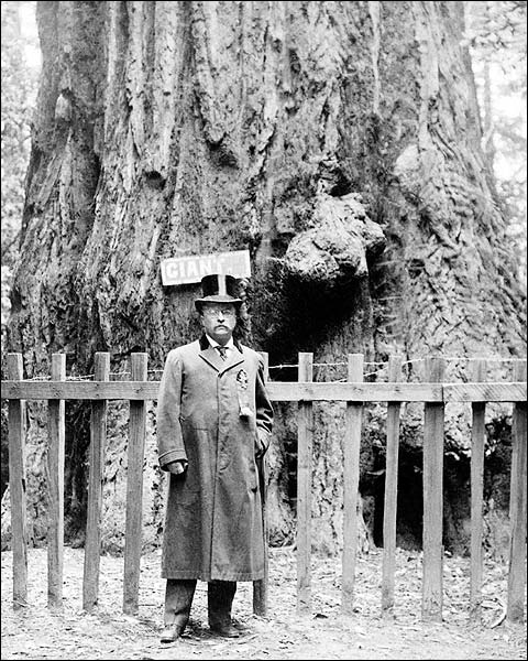 President Theodore Roosevelt at Big Tree Grove 1903 Photo Print for Sale