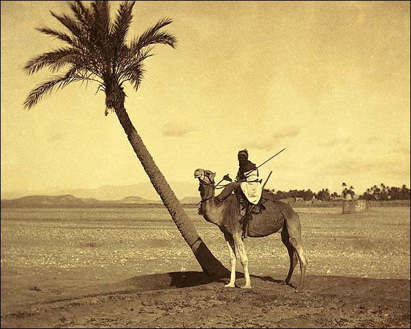 Algerian Desert Camel Rider Late 1800s Photo Print for Sale