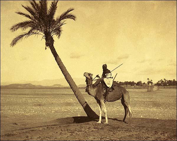 Algerian Desert Camel Rider Late 1800s Photo Print for Sale