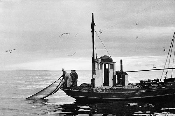 Norwegian Fishermen Pull Fishing Net into Boat Photo Print for Sale