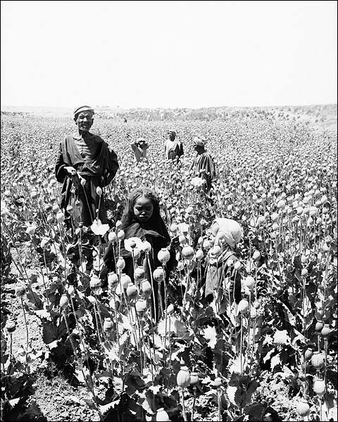 Egyptian Workers in Opium Poppy Field 1900s Photo Print for Sale