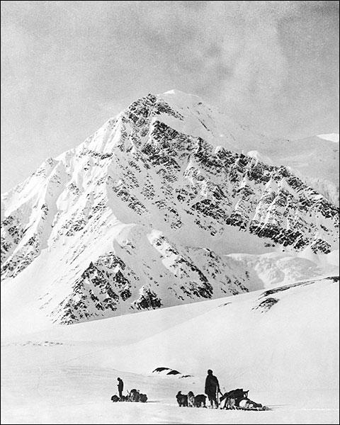 Dogsledding Mt. McKinley Denali Park Alaska Photo Print for Sale