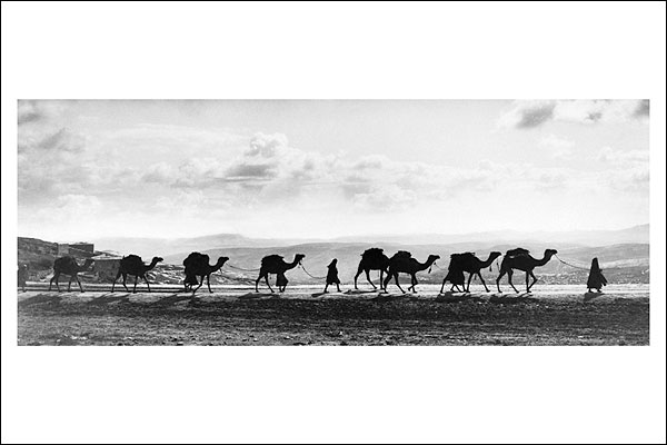 Camel Caravan on Mt. Olives in Jerusalem Photo Print for Sale