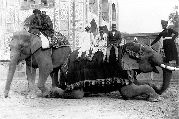 Elephants, Elephant Drivers / Mahouts India Photo Print for Sale