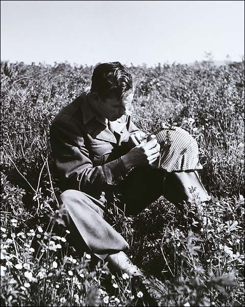 American Soldier Picks Flowers Italy, 1945 Photo Print for Sale