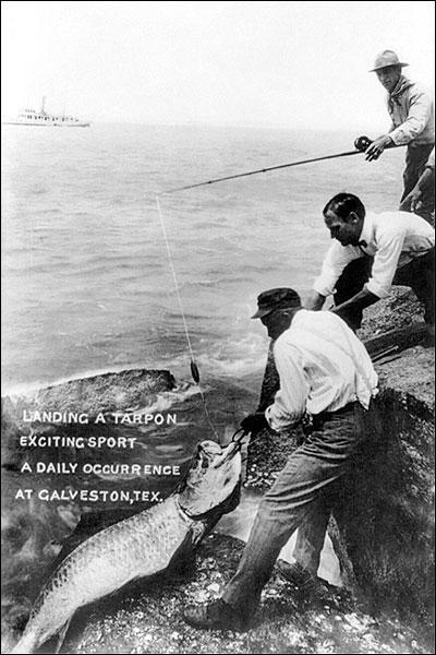 Big Tarpon Fish Galveston Sport Fishing Photo Print for Sale