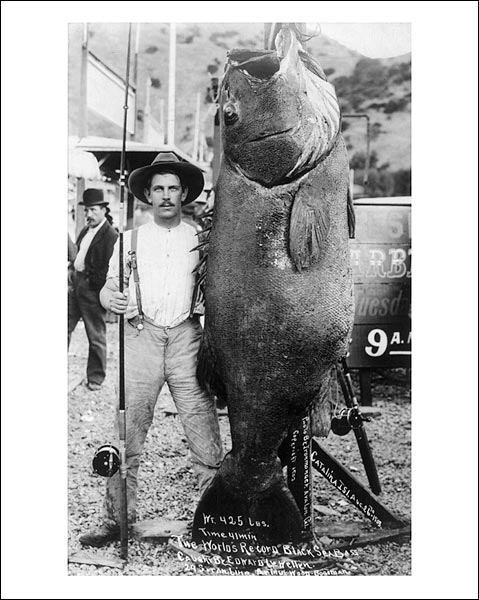 Black Sea Bass World Record Giant Fish 1903 Photo Print for Sale