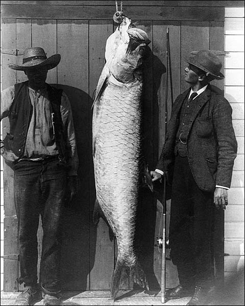 Tarpon Fish & Fishermen Florida Gulf Fishing Photo Print for Sale