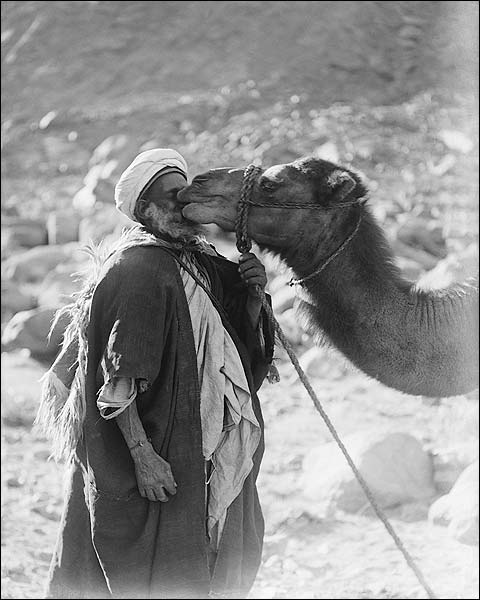 Funny Camel Kissing Red Sea Camel Love Photo Print for Sale