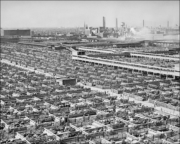 Chicago Livestock Stockyards 1947 Photo Print for Sale