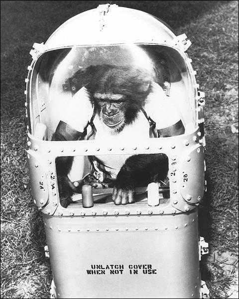 Ham the Chimpanzee Astronaut  Photo Print for Sale