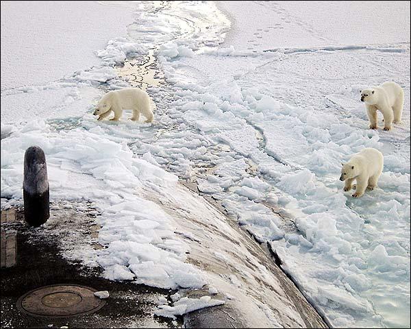 Polar Bears USS Honolulu SSN 718 Submarine Photo Print for Sale